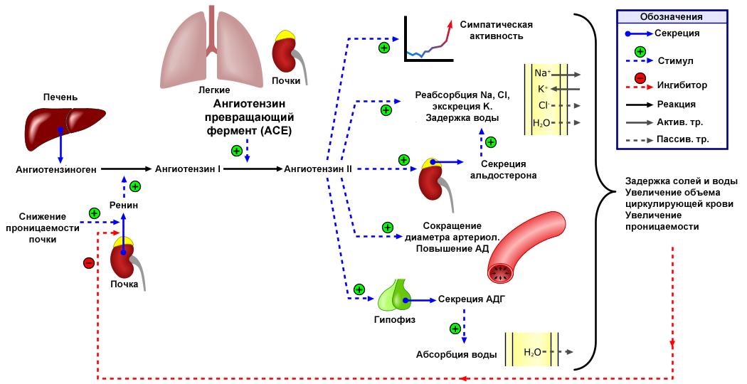 a magas vérnyomású dohányzás veszélyes otthoni magas vérnyomás kezelésére szolgáló gyógyszerek
