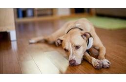 a kutya magas vérnyomásban szenved alternatív orvoslás magas vérnyomás ellen