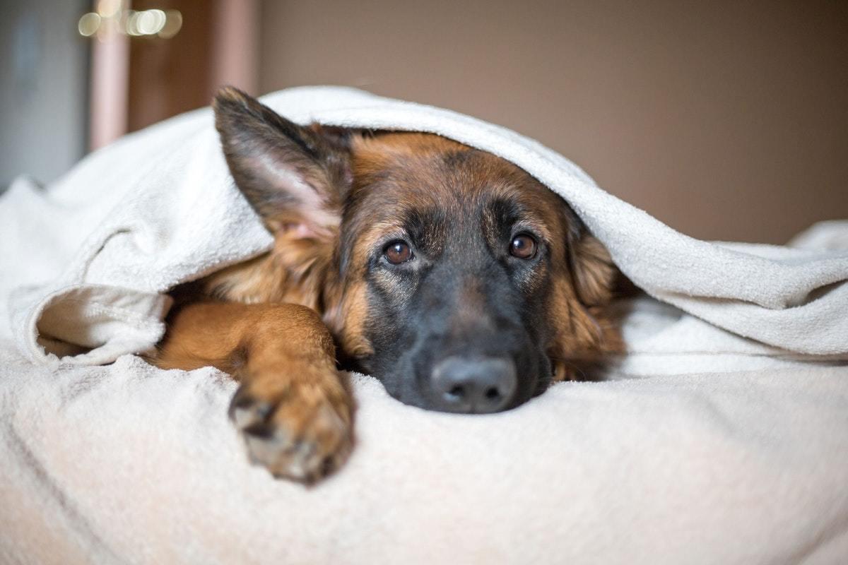 a kutya magas vérnyomásban szenved a magas vérnyomás mértéke vagy stádiuma