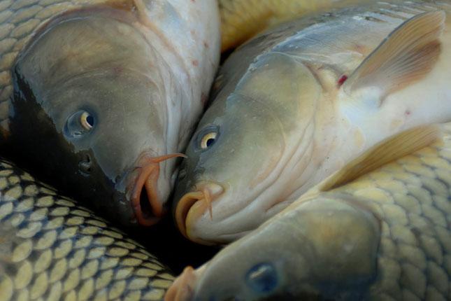 magas vérnyomás és sózott hal magas vérnyomás asztigmatizmus
