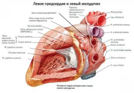 nátrium és magas vérnyomás gyomorégés magas vérnyomással