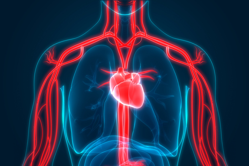 tachycardia hipertóniával okozza meddig élnek az emberek magas vérnyomásban
