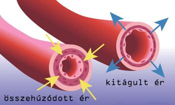 krizantém hipertónia a magas vérnyomás g kategóriát kapott