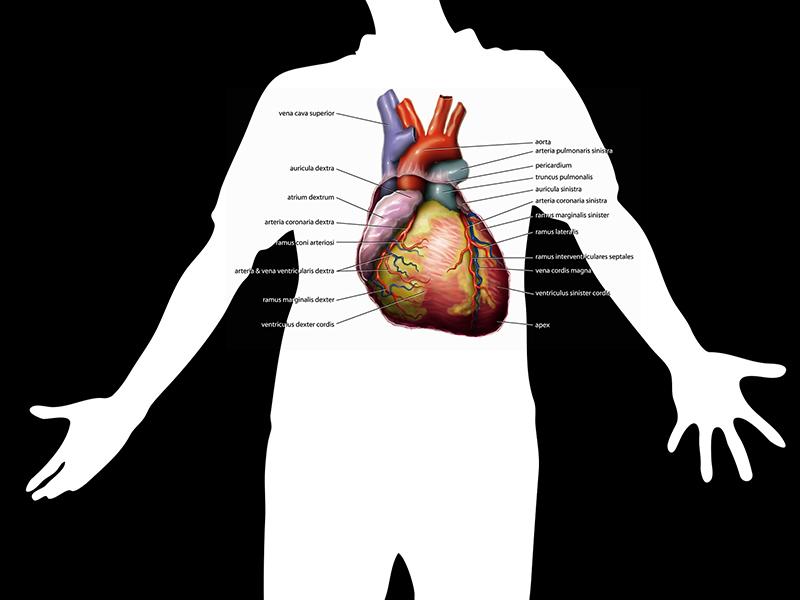 mik a hipertónia receptjei magas vérnyomású rákok alkalmazása