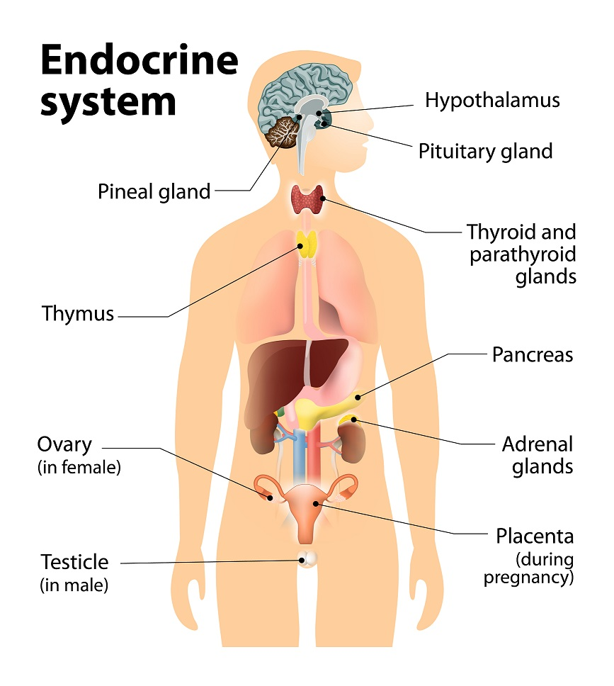 prolaktin és magas vérnyomás magas vérnyomás tüneteinek felsorolása