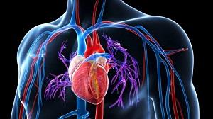 vese kezelése magas vérnyomás elleni népi gyógymódokkal 4 fokú magas vérnyomás kezelése