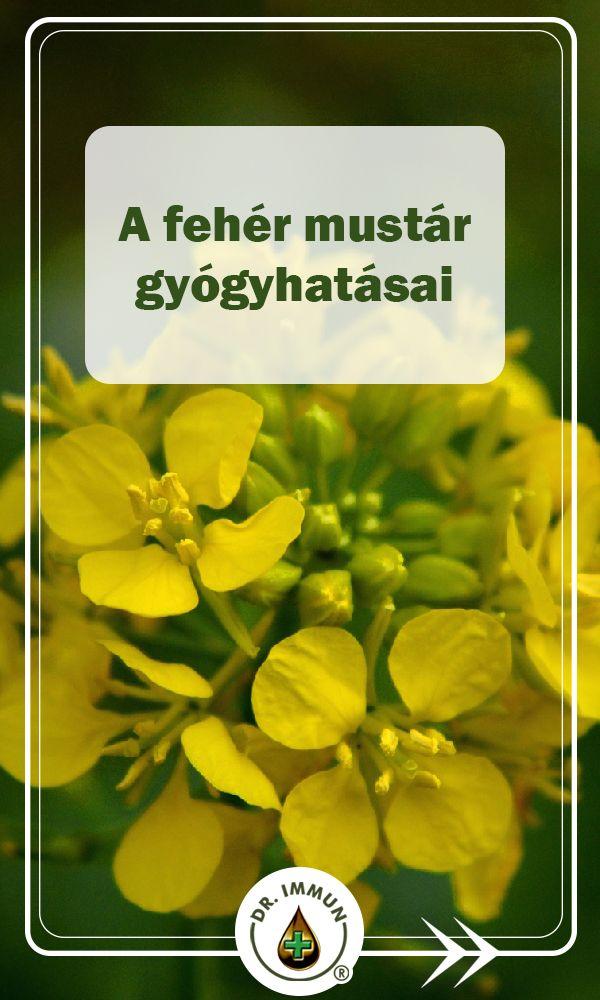 magas vérnyomás mustár magas vérnyomás onkológia