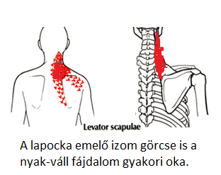 hipertónia fiziotének