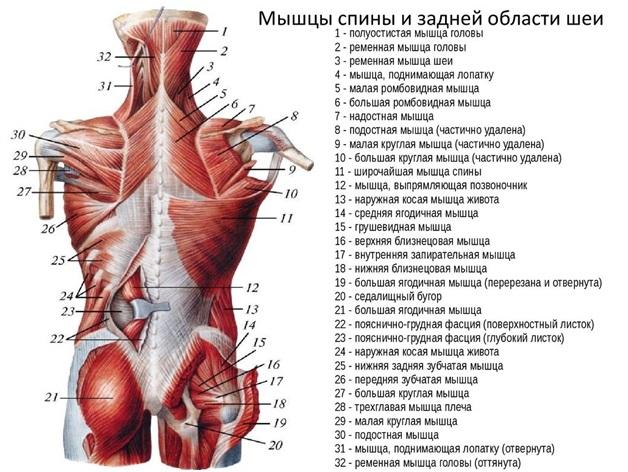 az izom hipertóniára jellemző magas vérnyomás 2 fokos krízis