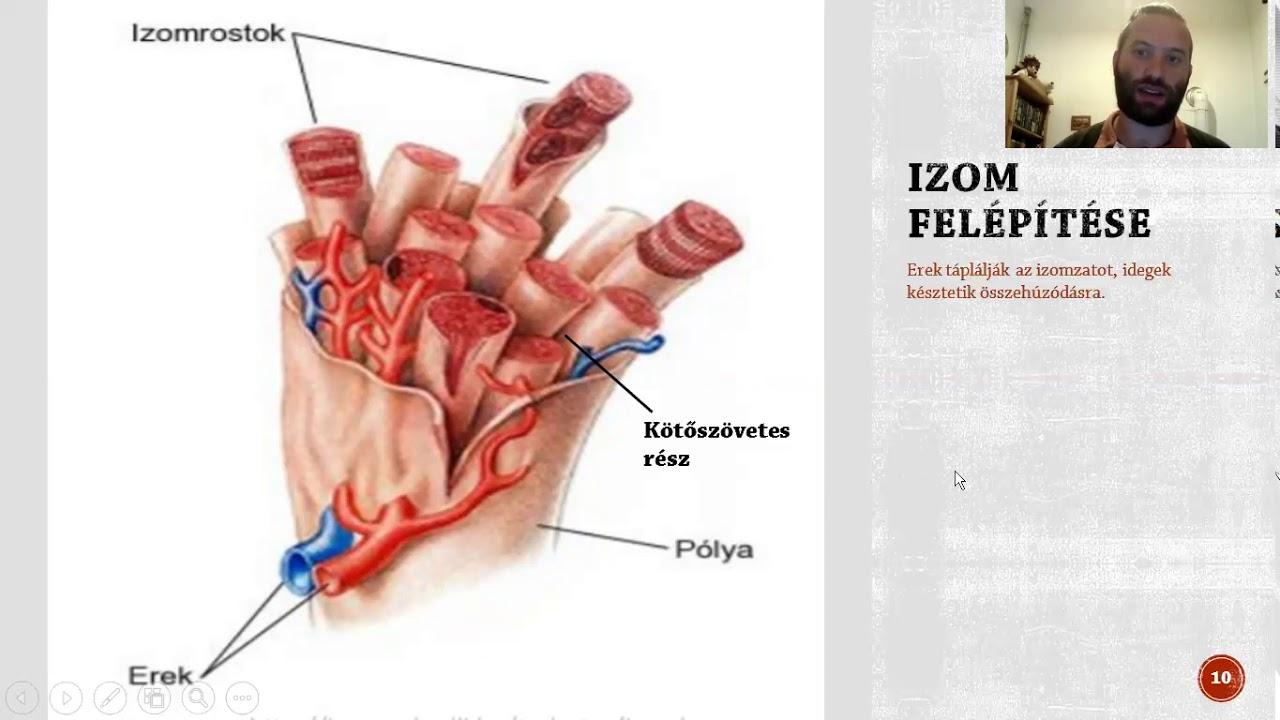 az izom hipertóniára jellemző a magas vérnyomásban fellépő légszomj jellege