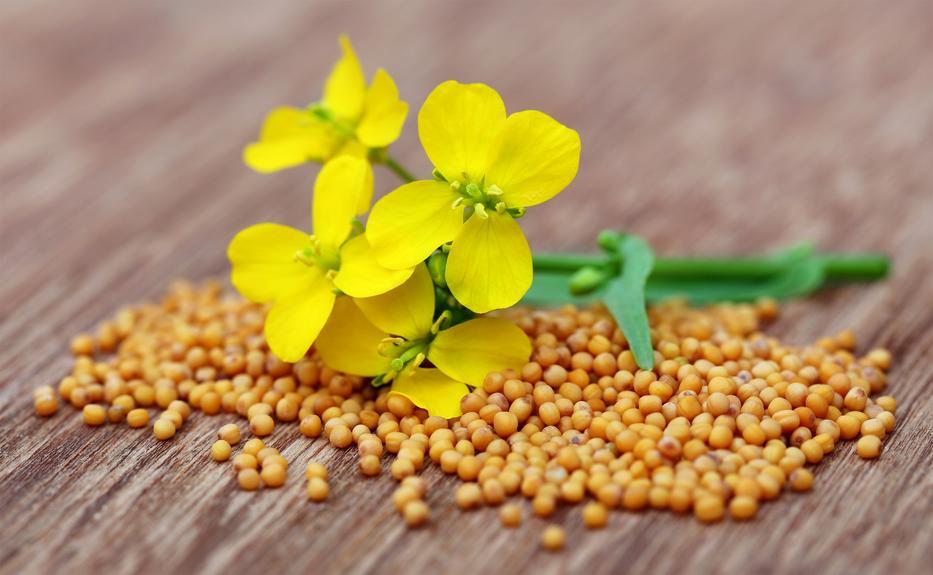 6 ok, amiért érdemes mustármagot fogyasztani   Well&fit