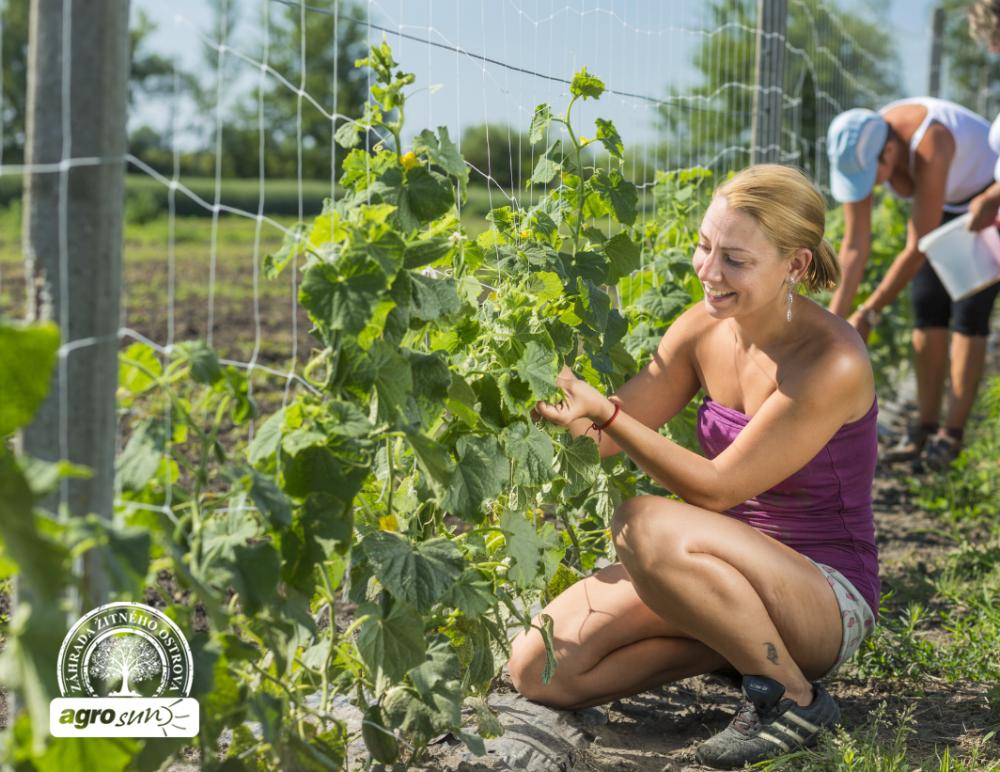 Egészséges, friss uborka | Új Nő